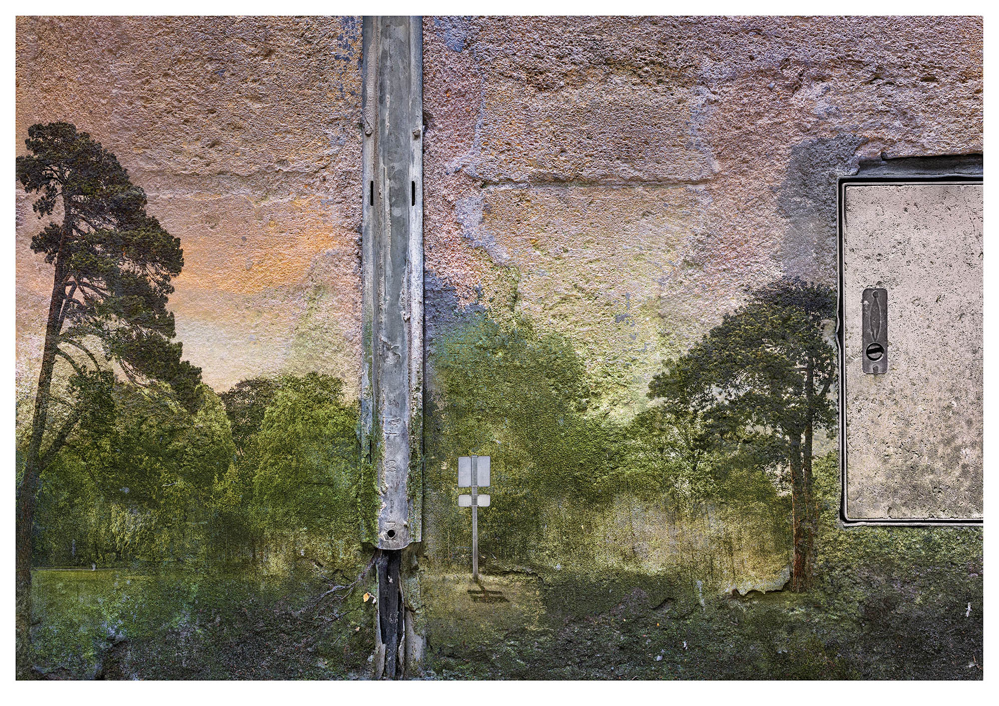 2nd. in series: woodland photograph overlaid on wall with old cabling in conduit.