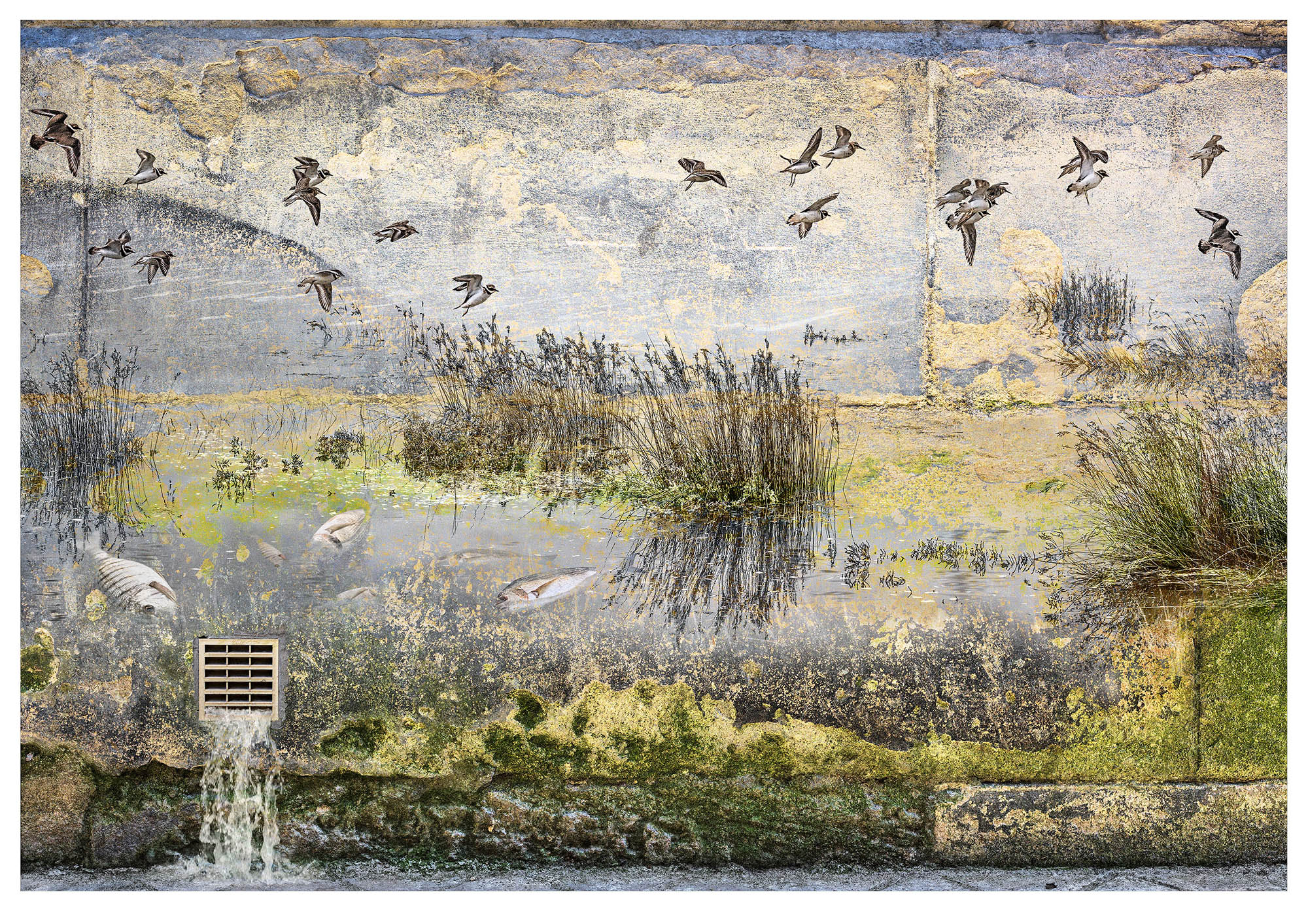 No. 7: A river landscape scene overlaid on textured wall. The river has floating dead fish while overhead birds fly away